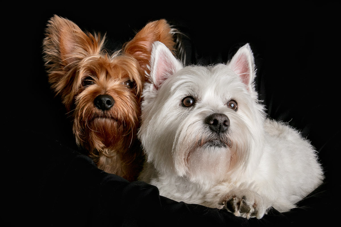 Pet portrait: Best friends Dolly and Lily